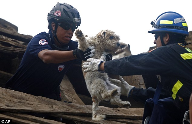 Japanese pooch being saved!